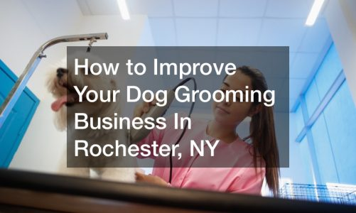 How to Improve Your Dog Grooming Business In Rochester, NY